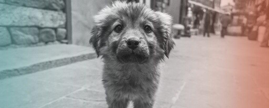 Adopteer een puppy uit Griekenland - Geef een van onze pups een kans! - Skýlos Strays