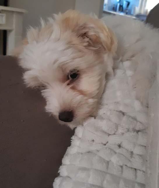 Bonbon is geadopteerd - Deze Griekse straathond heeft zijn eigen huisje gekregen