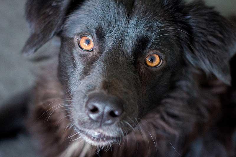 Geef een buitenlandse hond een kans - Word bemiddelaar bij Skýlos Strays
