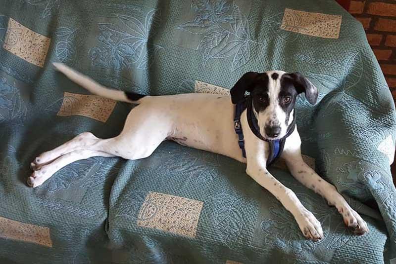 Huisbezoeker worden - Help een Griekse hond van Stichting Skýlos Strays