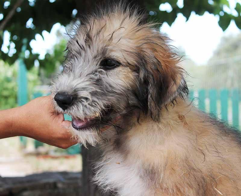 Meli is een Griekse straathond Wil jij haar adopteren? 3