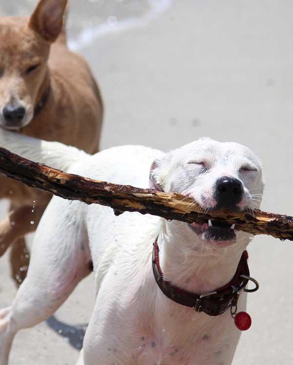 Nazorgmedewerker worden - Help een buitenlandse hond - Skýlos Strays
