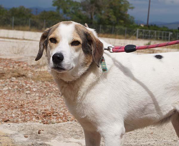 Griekse hond Nefeli bewijst het: ook met zeven jaar verdien je een kans