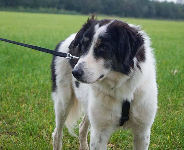 Paul verblijft bij een gastgezin van Skýlos Strays - Adopteer deze Griekse hond! 2