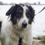 Paul verblijft bij een gastgezin van Skýlos Strays - Adopteer deze Griekse hond! 8