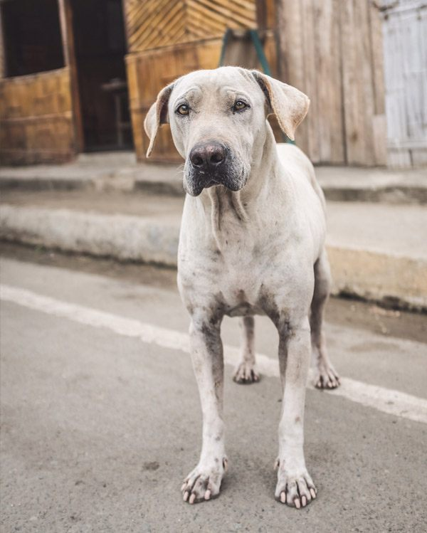 Skýlos Strays Contact - Help een Griekse straathond naar een eigen thuis!
