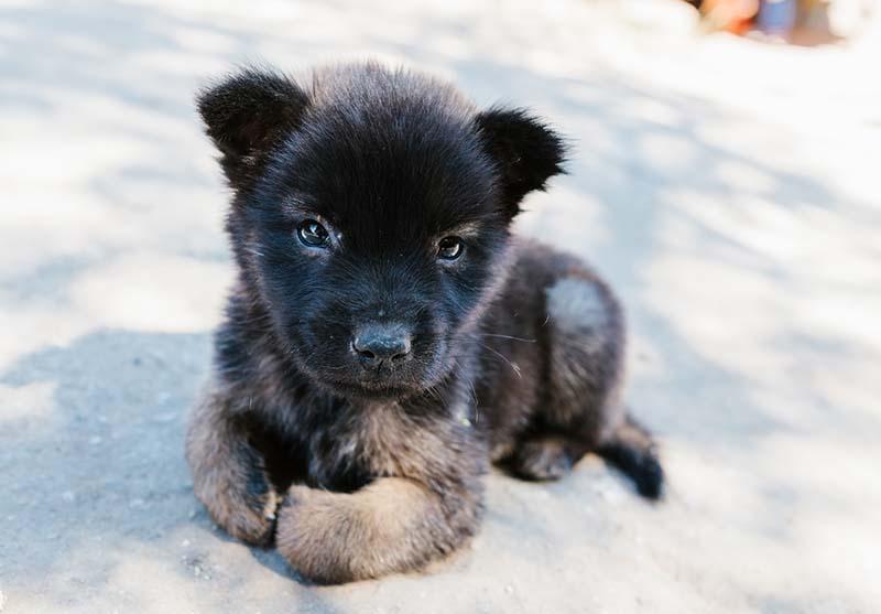 Word bemiddelaar en help een buitenlandse hond naar een goede leven - Skýlos Strays