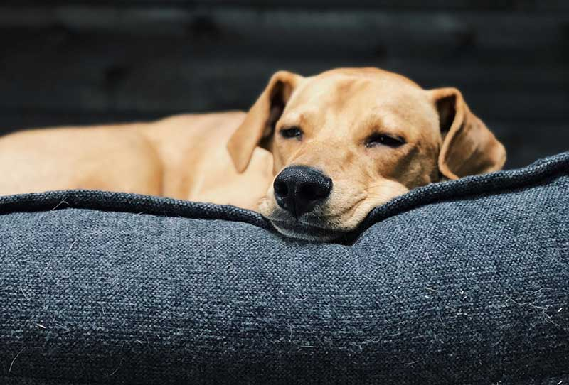Word huisbezoeker voor Skýlos Strays - Help een buitenlandse hond