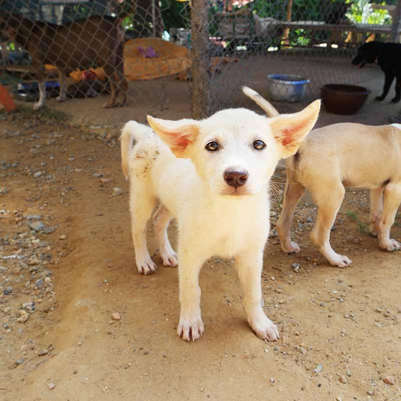 Word vrijwilliger en help een hond uit het Griekenland - Skýlos Strays