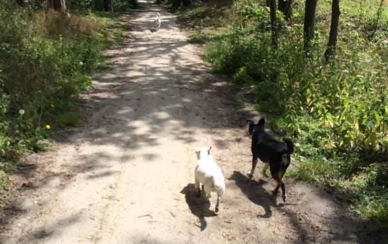 Adopteer een oudere hond uit het buitenland - Geef een Griekse hond een kans