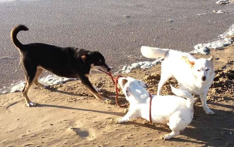 Adopteer een oudere hond uit het buitenland - Griekenland