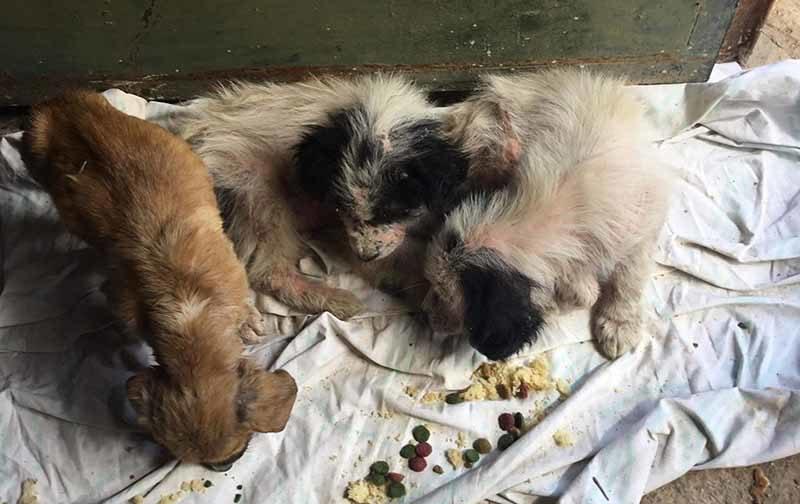 Adopteer een pup uit Griekenland