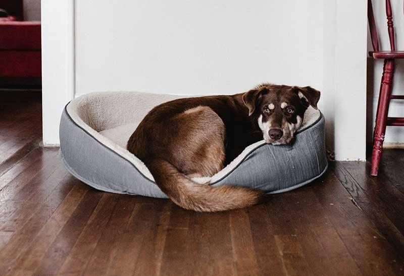 Adoptieprocedure Griekse hond