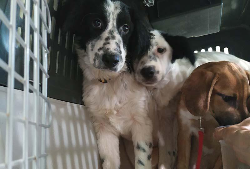 Een Griekse pup adopteren - Het verhaal van drie ongewenste pups