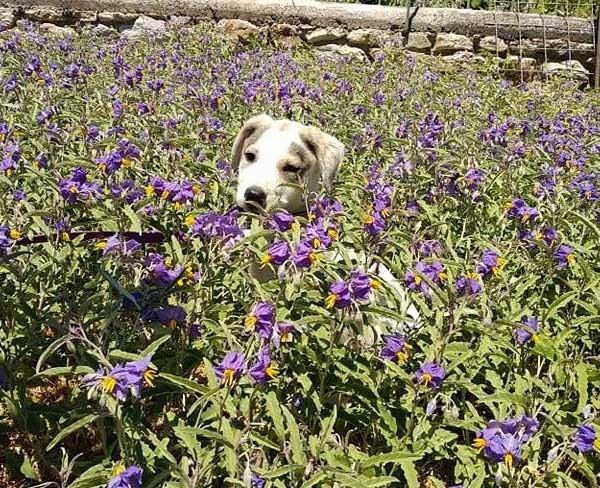 Griekse zwerfhond Betty is geadopteerd -1