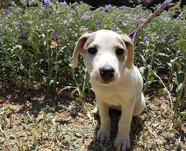Griekse zwerfhond Betty is geadopteerd -3