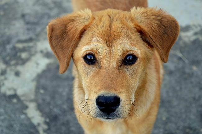 Hoe adopteer ik een buitenlandse hond