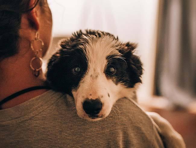 Hoe kan ik een Griekse hond adopteren - Adopteer een van onze honden