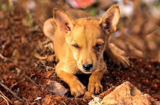 Hoe kan ik een hond adopteren uit het buitenland - Adopteer een Griekse viervoeter