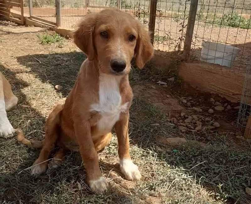 Nethan wil graag een thuis Adopteer een hond uit Griekenland! 1