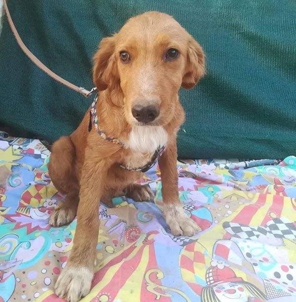 Nethan wil graag een thuis Adopteer een hond uit Griekenland! 3
