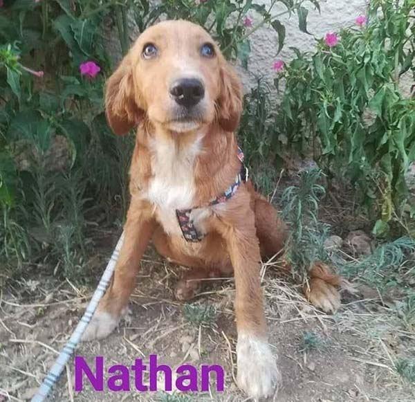 Nethan wil graag een thuis Adopteer een hond uit Griekenland! 4