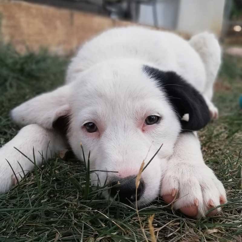 Vlakbij een Atheense supermarkt staat een fruitkistje met daarin 4 puppy's, waaronder deze mooie Zahra