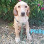 Philip is een Griekse zwerfhond Wil jij hem adopteren? 1