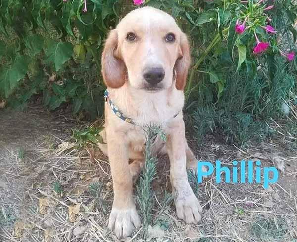 Philip is een Griekse zwerfhond Wil jij hem adopteren? p