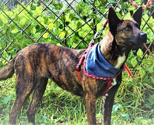 Renia heeft de nodige klappen gehad als zwerfhond - Nu is ze klaar voor adoptie -2