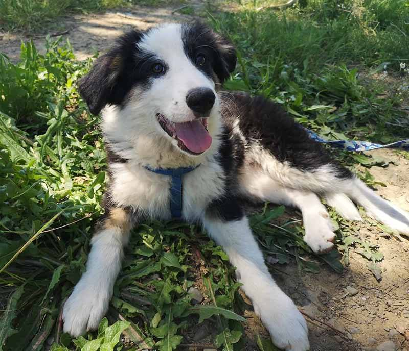 Roula werd als kleine pup gedumpt
