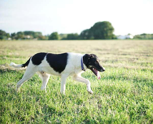 Theo wil graag een thuis Adopteer een hond uit Griekenland! p