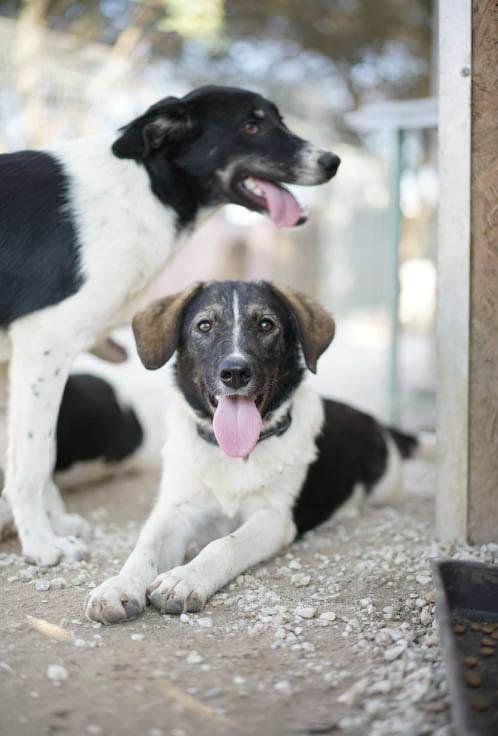 Tori is een buitenlandse hond Haal jij haar uit de shelter? 3