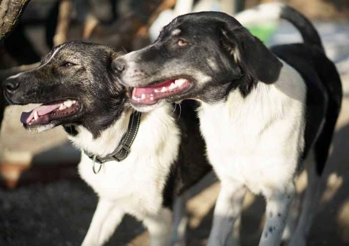 Tori is een buitenlandse hond Haal jij haar uit de shelter? 6