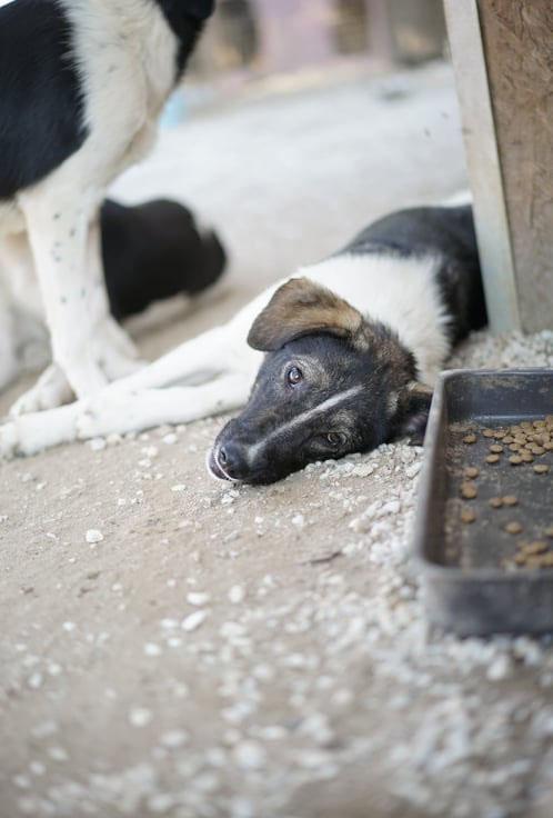 Tori is een buitenlandse hond Haal jij haar uit de shelter? 8