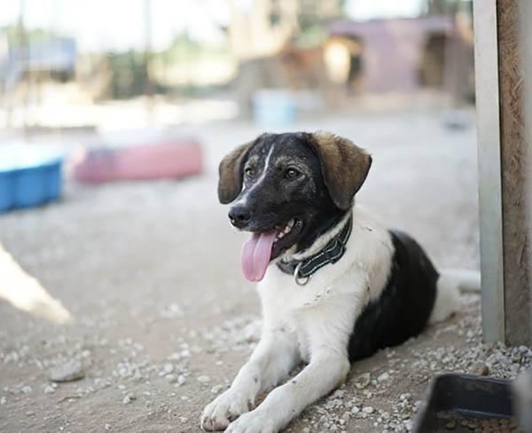 Tori is een buitenlandse hond Haal jij haar uit de shelter? p