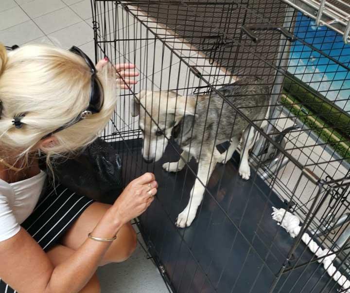 Vluchtbegeleider worden voor Skýlos Strays - Een hond meenemen uit Griekenland