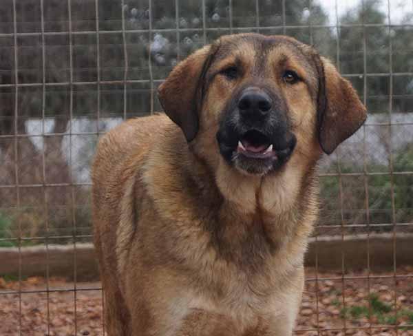Griekse hond Sven zoekt een baasje