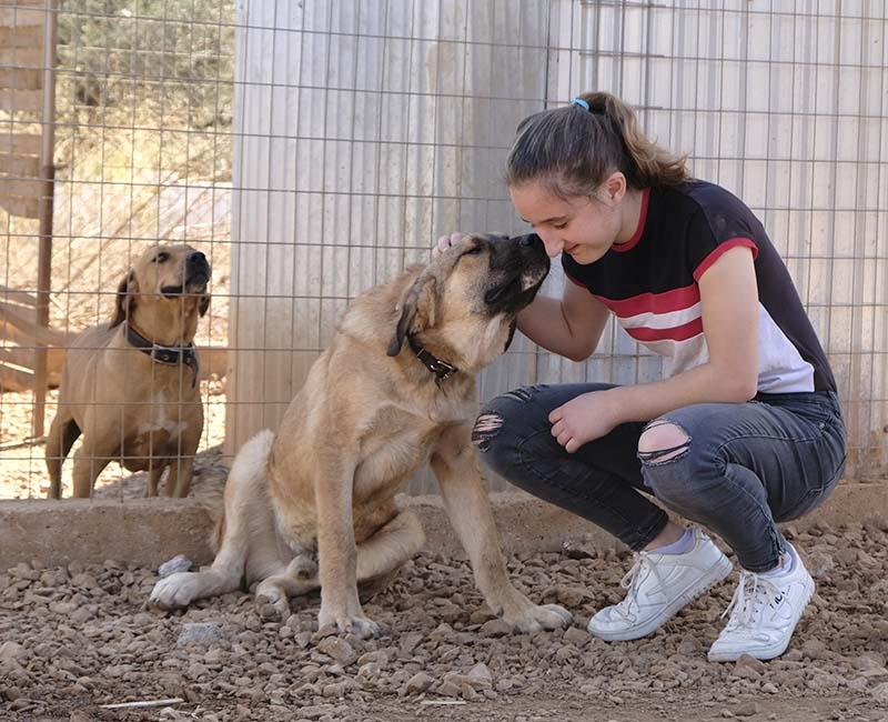 Sven is een grote lieverd - adopteer deze Griekse hond!