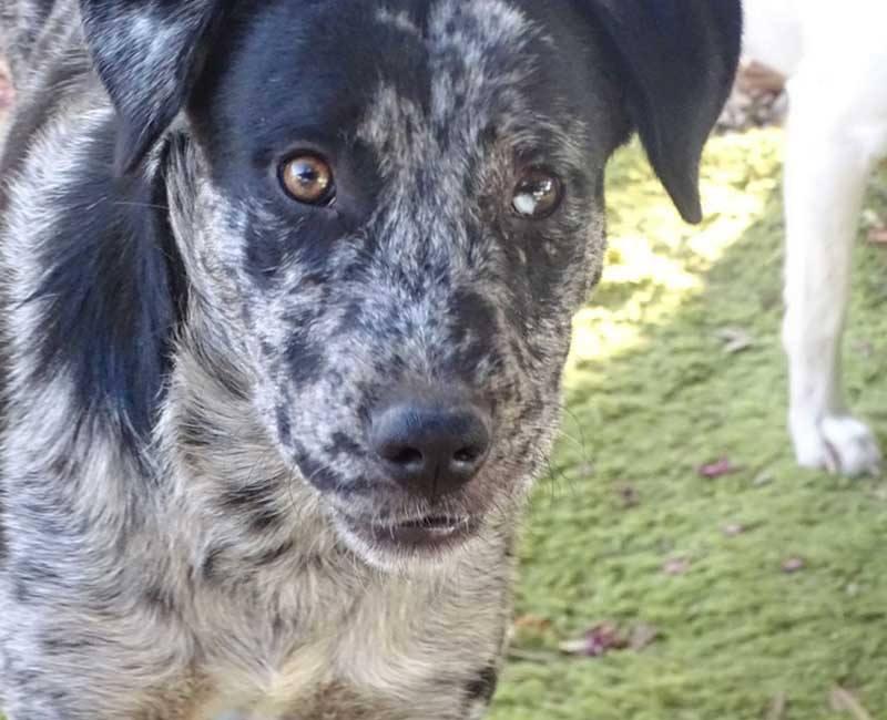 Willow is een hond uit het buitenland Haal jij hem uit de shelter? 1