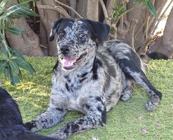 Willow is een hond uit het buitenland Haal jij hem uit de shelter? 10