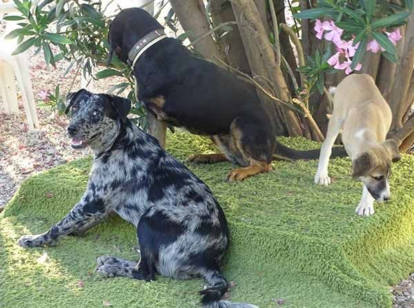 Willow is een hond uit het buitenland Haal jij hem uit de shelter? 9