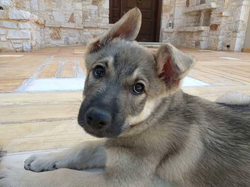 Wolfy werd in een privétuin geboren en had een goede start in het leven