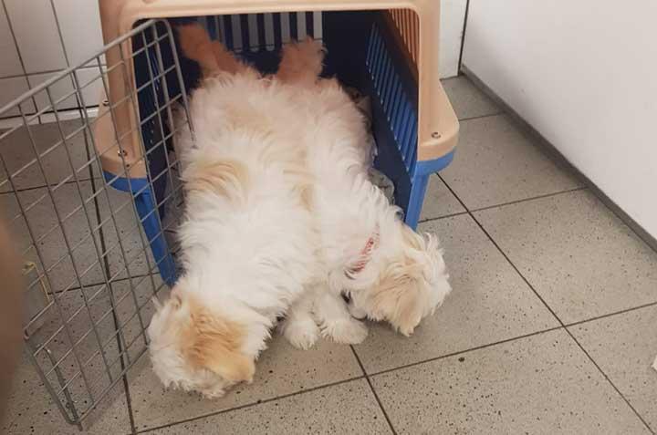 Word luchthavenbegeleider bij Skýlos Strays - Help een hond op weg naar een nieuw thuis