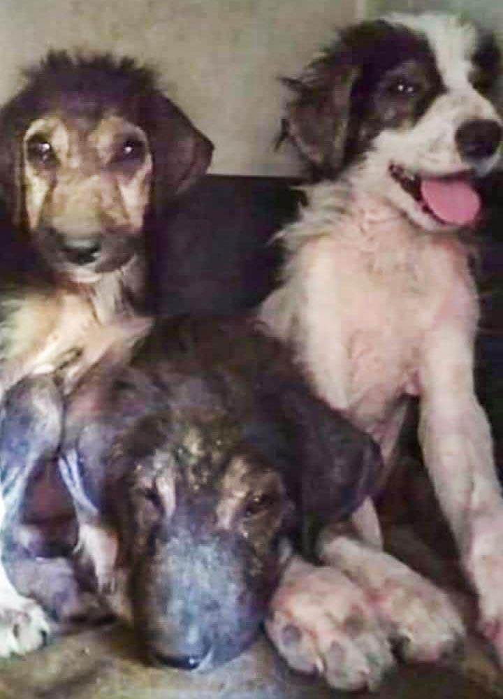 Pups Jean, Paul en Elsa gered uit de brand