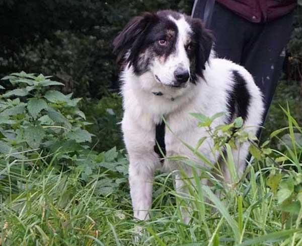 Paul verblijft bij een gastgezin van Skýlos Strays - Adopteer deze Griekse hond! 7a