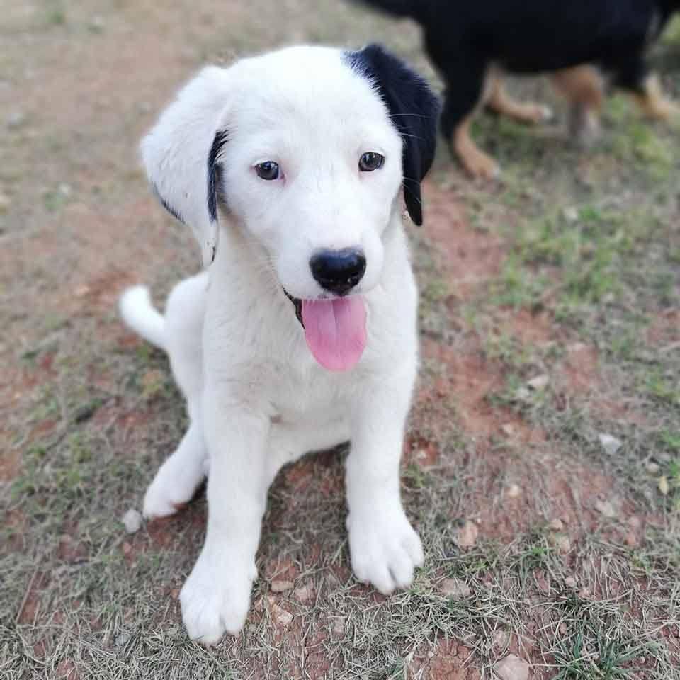 Pup Zahra wordt gevonden in een fruitkistje -2