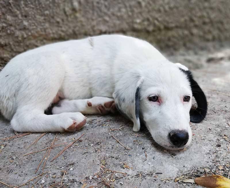 Pup Zahra wordt gevonden in een fruitkistje -3