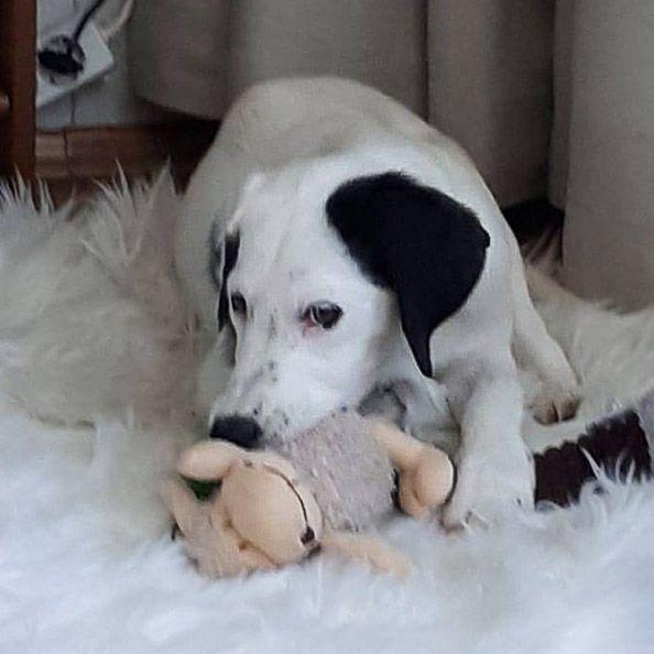 Pup Zahra wordt gevonden in een fruitkistje -6