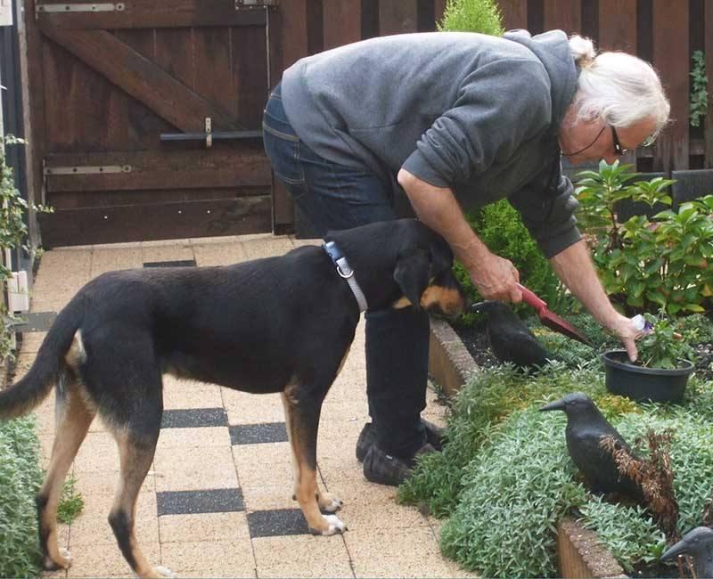Eens opgejaagd, maar nu heeft zwerfhond Bruno een liefdevol thuis!